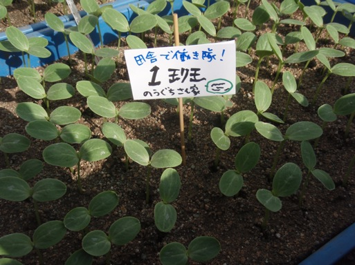 p4020113.JPG